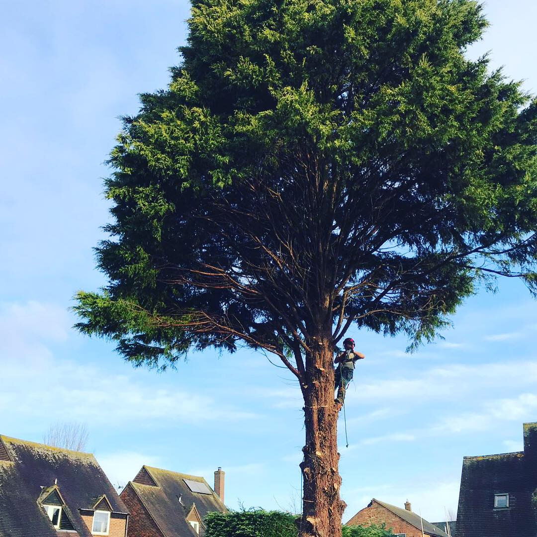 AJB Tree Care