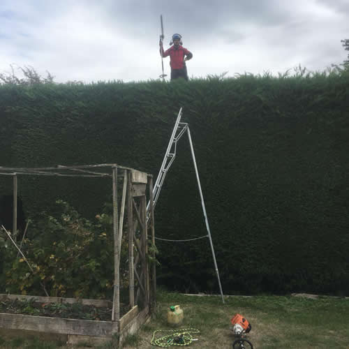 AJB Tree Care - Hedge Work