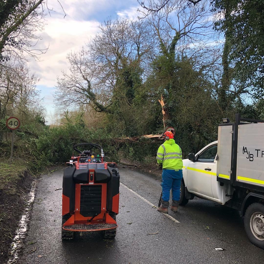 Emergency Tree Work in Bucks