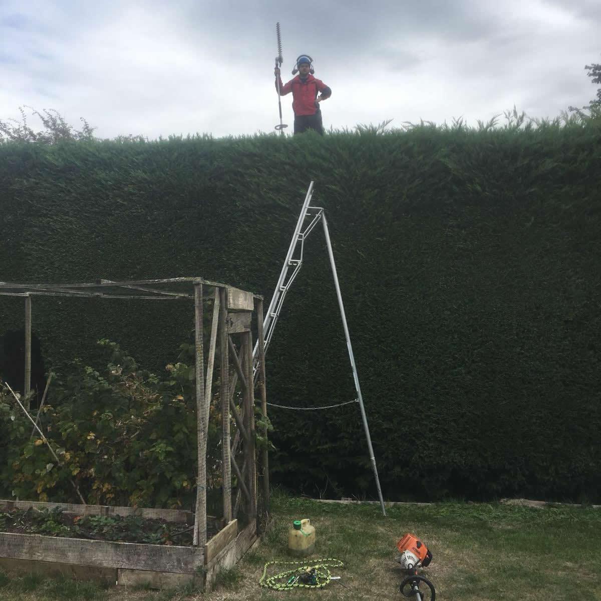 AJB Tree Care - Hedge Work