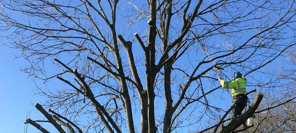 Tree Pruning and Pollarding in Oxfordshire
