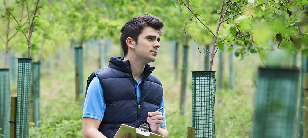 Tree Surveys in Buckinghamshire
