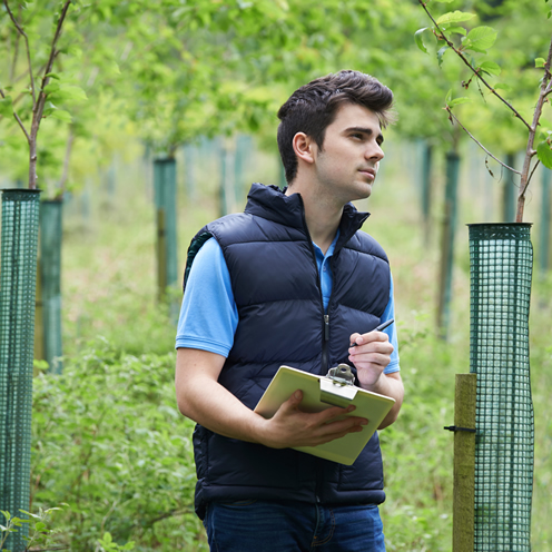 AJB Tree Care - Tree Surveys